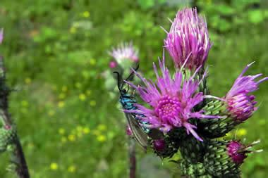 nome di fiore nomi maschili di fiori amazing alberi da fiore da