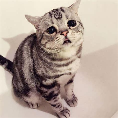 imagenes de gatos tristes con mensajes las mejores fotos de gatos tristes de diferentes razas