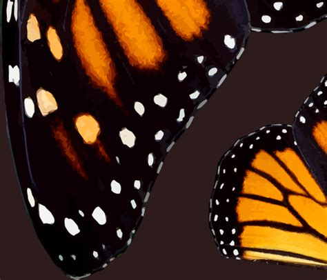 monarch design giant orange monarch butterfly wings fabric bonnie