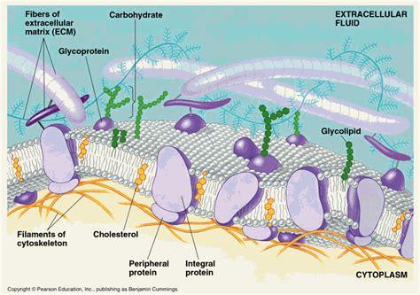 csir life science preparation august