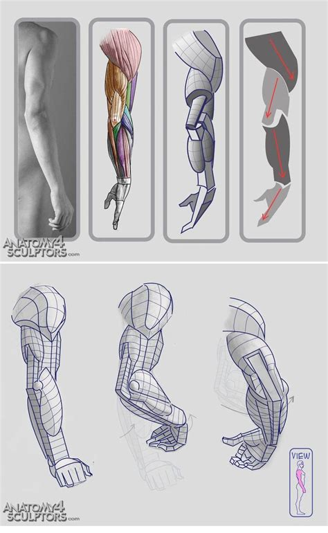 anatomy on pinterest character design references