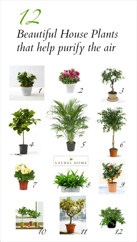 beautiful house plants photos the best and most beautiful house plants for cleaner air