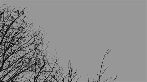 grey wallpaper with trees gray minimalistic trees wallpaper allwallpaper in 12839
