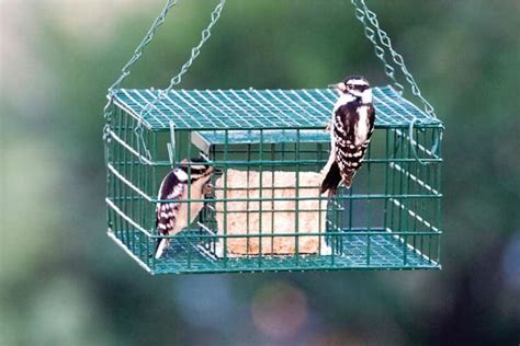 starling proof suet feeder plans woodworking projects