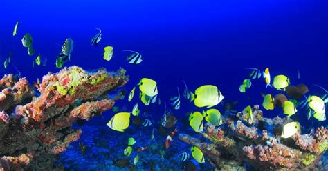 best relaxing the best relaxing aquarium stunning coral reef fish tank
