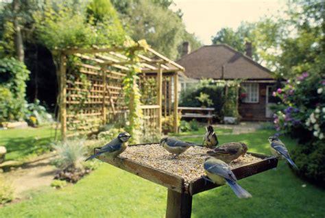 mangiatoie per uccelli da giardino birdgardening guida a come attirare uccelli in giardino