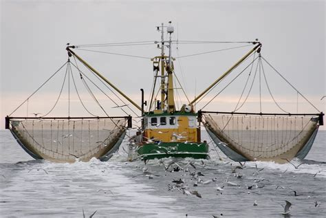 Financing available for frozen fish processors   2013
