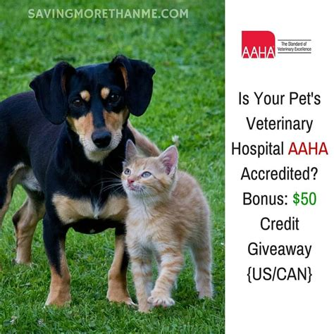 Veterinary Giveaways - is your pet s veterinary hospital aaha accredited bonus 50 credit giveaway us can