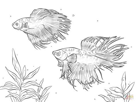 coloring pages of betta fish two siamese fighting fishes coloring page free printable