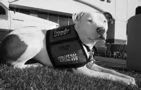 can pitbulls be service dogs renting with an emotional support service or therapy