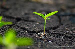 plant wallpaper sanjay photo world growing plants from soil hd wallpapers