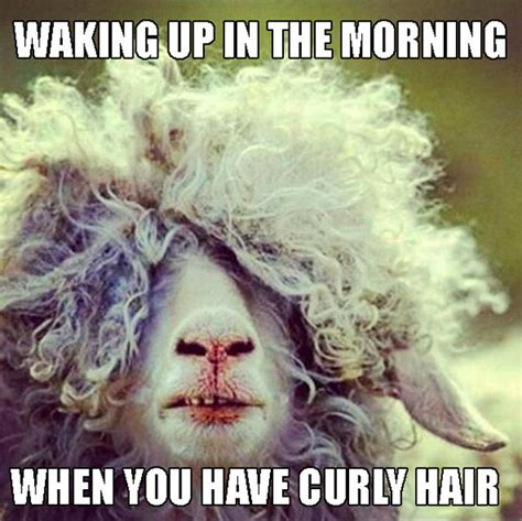 Curly Hair Meme - 22 memes that are way too real for people with curly hair