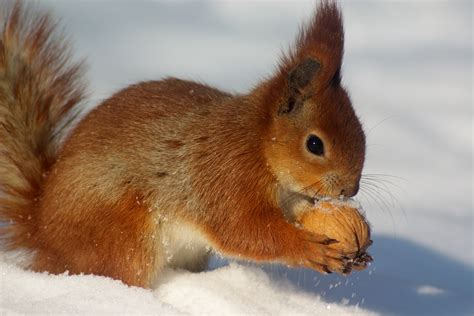 what do animals squirrel away for winter wonderopolis