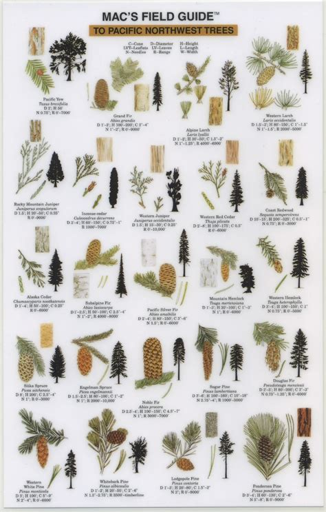 when to take tree 2013 take a walk a guide and discover the of our local