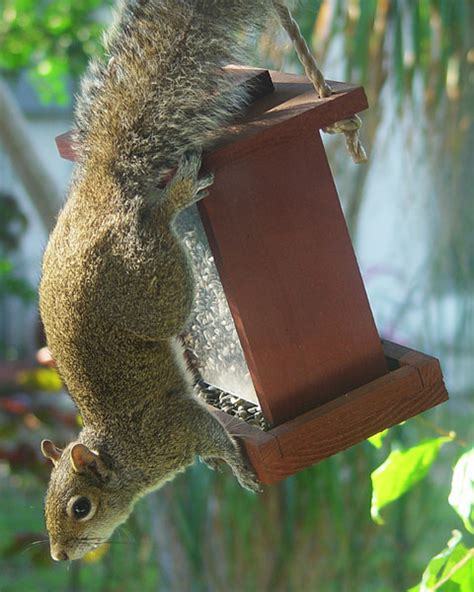 bird feeders and squirrels