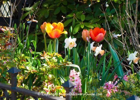 spring flowers  boston garden tours boston discovery