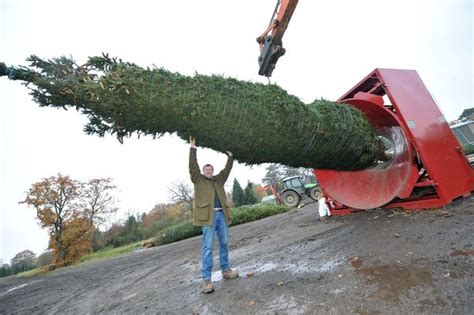 largest christmas tree farms world s tree wrapper drafted in to shirley farm shop birmingham mail