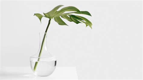 minimalist plants the road to minimalist thinking