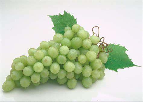 imagenes hd uvas r 225 cimo de uvas hd fotoswiki net