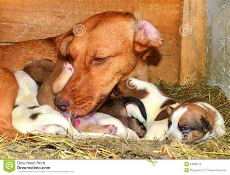 breastfeeds puppy pin puppy on