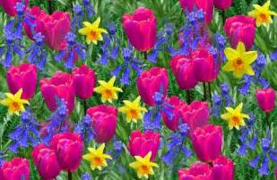 image of spring flowers spring flowers backgrounds