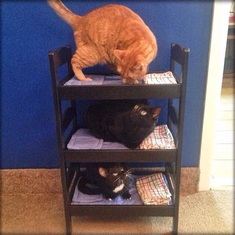 Bunk Beds For Cats 19 Cats Who Understand Doll Beds Were Invented Just For Them