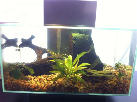 Fluval Edge Aquascape by Fluval Edge Aquascaping Help Aquarium Advice Aquarium