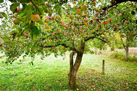 Fruit Tree Orchard Planting Guide