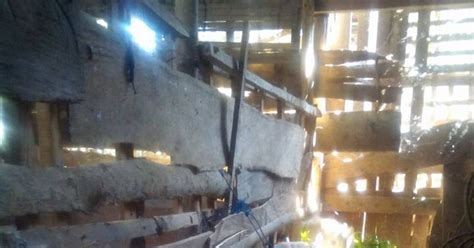 Fermentasi Pakan Ternak Kambing Gibas ternak kambing gibas sangat efektif tanpa ngarit