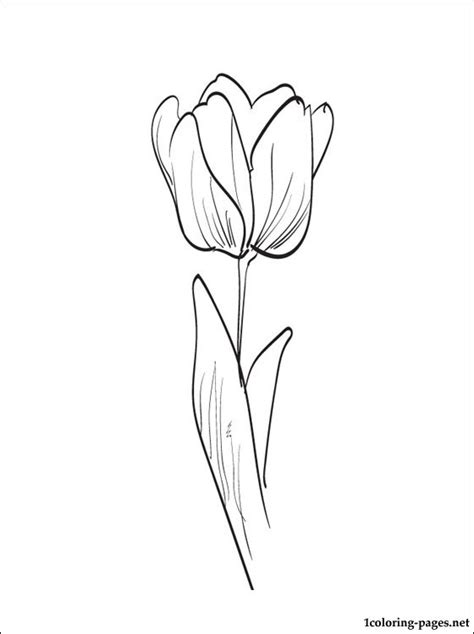 coloring pictures of tulip flowers tulip writing pages coloring pages