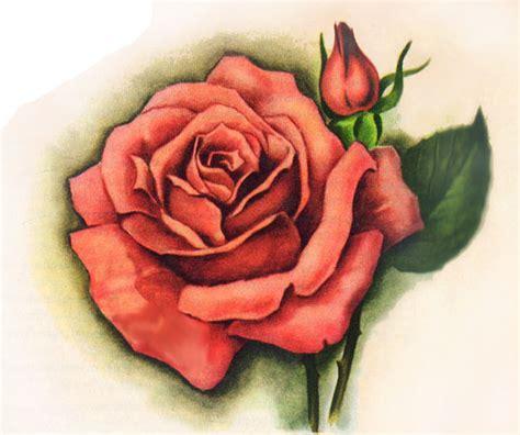 disegni di piante e fiori disegni fiori