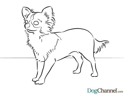 chiwawa puppies coloring pages free coloring pages of chiwawa sheets