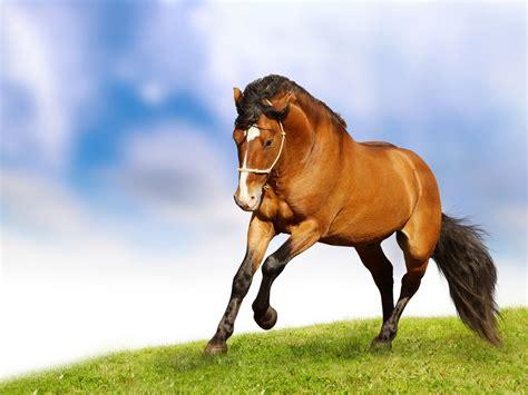 wallpaper horse free download horse 3d image animals wallpaper wallpaper wallpaperlepi