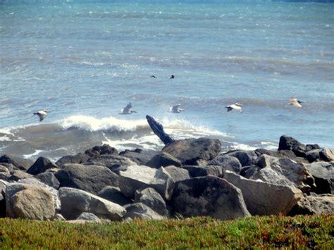 pelican point boat launch new radio