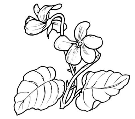 viola fiore disegno pin disegno di calla da colorare see it on
