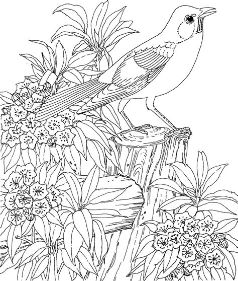 free coloring pages of songbirds birds coloring pages