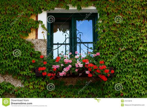 Windowsill Flowers Flowers On Windowsill Royalty Free Stock Images Image