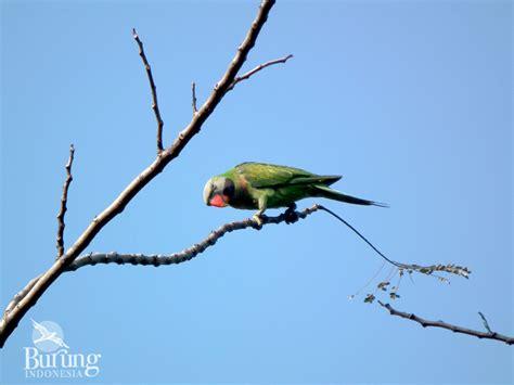 sketsa gambar burung di ranting pohon 28 images gambar pohon alam cabang bayangan hitam
