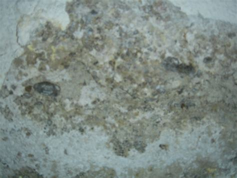 mold basement walls how to get rid of