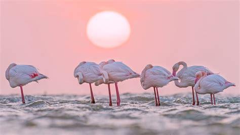 flamingo bay wallpaper flamingo wallpaper