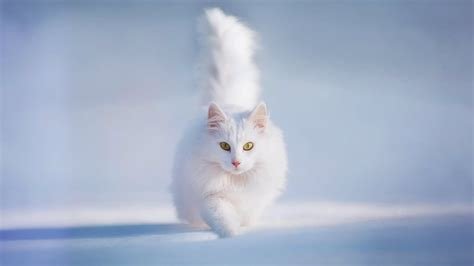 cat wallpaper tablet cat wallpapers hd wallpapers images pictures desktop