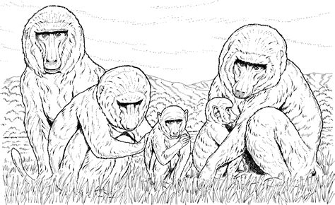 monkey family coloring pages how to draw monkey family