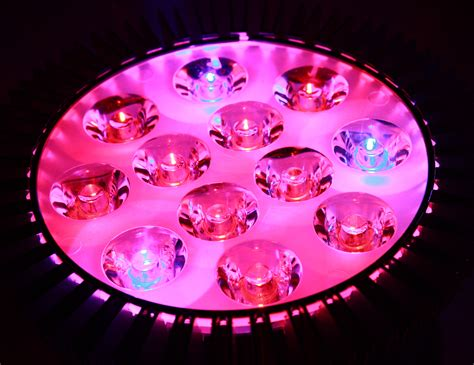 and blue led grow lights pink and blue led grow light picture free photograph