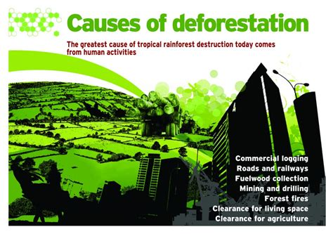 Causes And Effect Of Deforestation Essay by Deforestation Causes Effects Essay Flagstaff