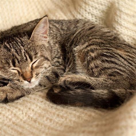 wie viel schlaf brauch ich test hochwertiges katzenfutter und hundefutter fit