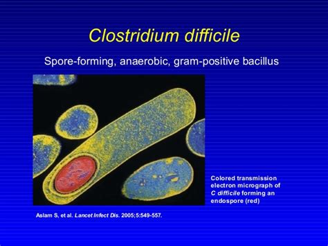 clostridium difficile c diff is more difficult than