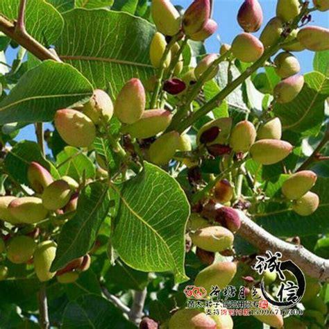 fruit trees wholesale 2017 wholesale grafted fruit tree seedlings planted