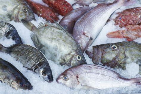 pesci da cucinare alla scoperta pesce castagna le ricette de la cucina