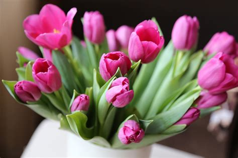 How Do You Keep Roses Fresh In A Vase by How To Keep Flowers Fresh With Sugar Water Florists