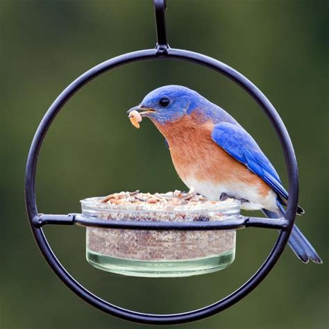 7 bird feeders for offering mealworms into the air